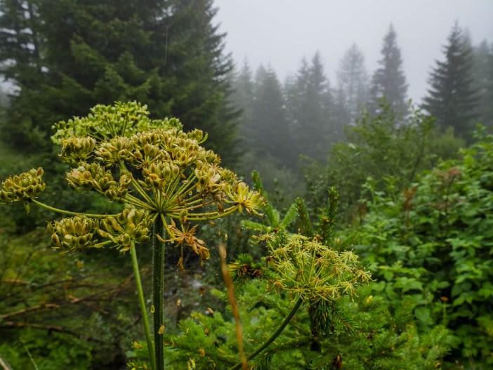 Val Faller Wildbeobachtung Graubünden Savognin Regen Nebel schlechtes Wetter Blumen