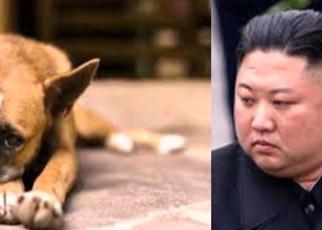 Corea del Norte prohíbe tener perros domésticos desde ahora