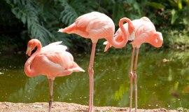 Zoologico de Cali, Colombia