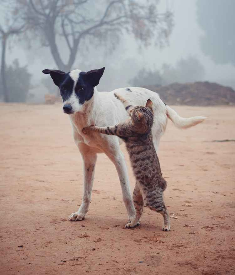 homeless cat fighting with dog on street
