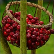 The Immortality Fruit: Cherry Magical Properties and Uses -- Magical Herbs