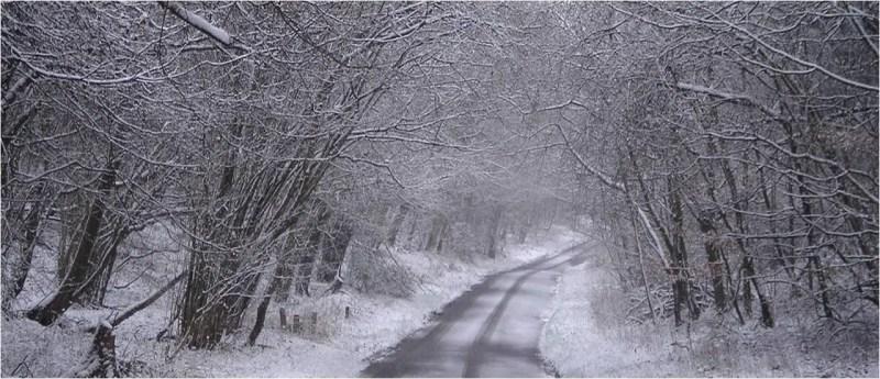 Snow Scene 2.jpg