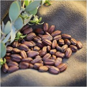 Jojoba Magical Meaning | Jojoba Magical Properties | Magical Herbs - Elune Blue (Featured Image)