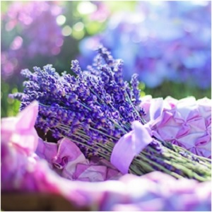 The Tranquility Herb: Lavender Magical Properties and Uses