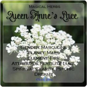 Queen Anne's Lace Magical Meaning | Queen Anne's Lace Magical Properties | Magical Herbs - Elune Blue