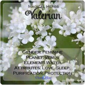 Valerian Magical Meaning | Valerian Magical Properties | Magical Herbs - Elune Blue