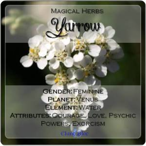 Yarrow Magical Meaning | Yarrow Magical Properties | Magical Herbs - Elune Blue