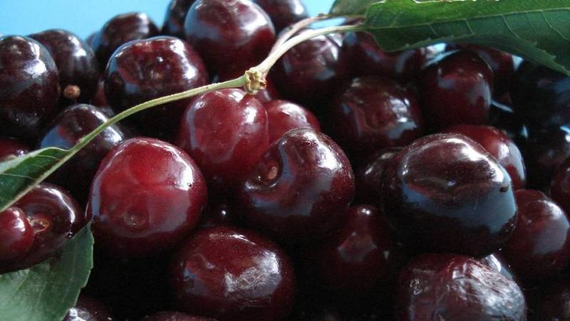 Black cherries are connected to the energies of longevity and immortality.  They live long, over 200 years in some case, and they decay very slowly.  They are also connected to the Sun's energy and love sunlight, however they are very vulnerable to storms and shade. -- Black Cherry Magical Properties and Uses
