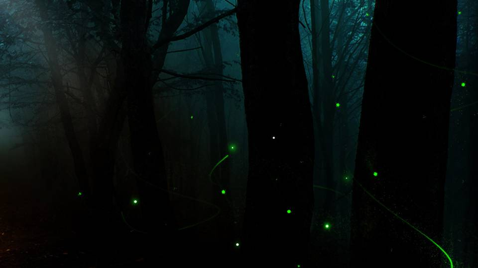 Fireflies in a Forest