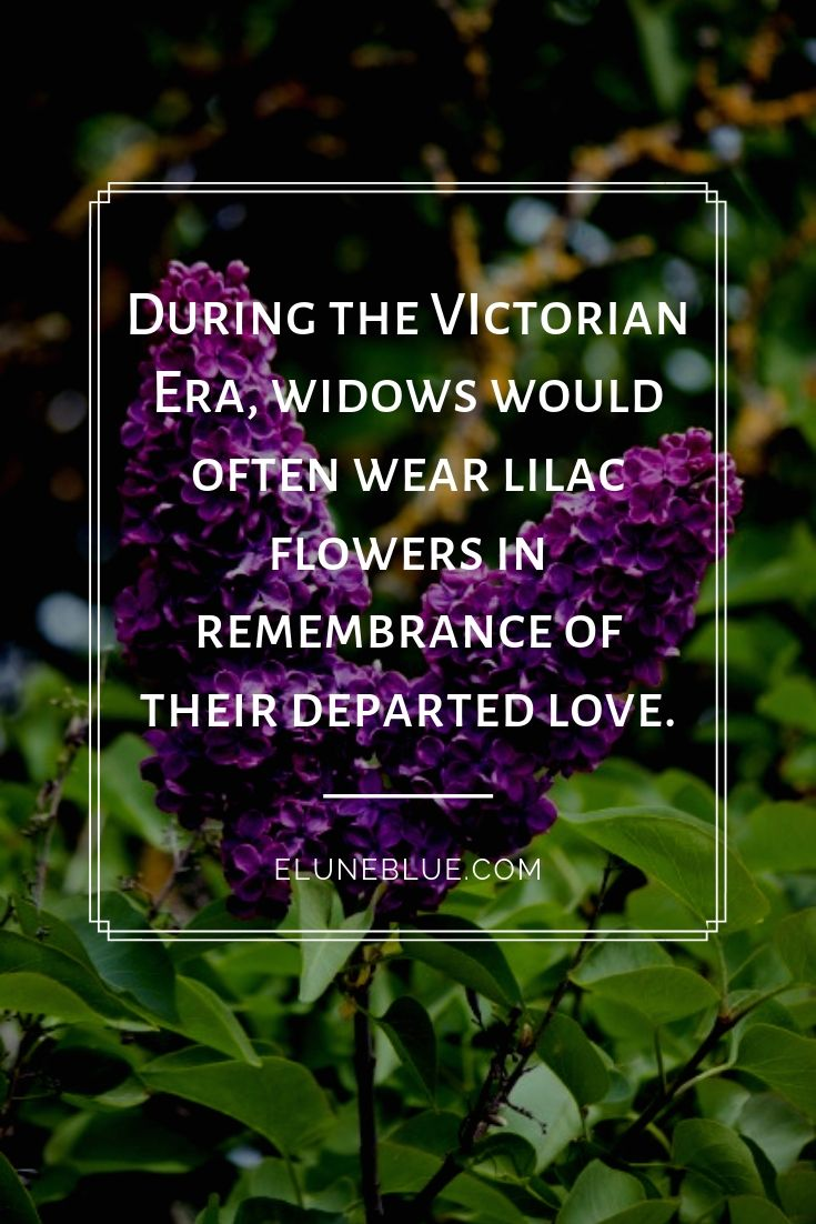 During the VIctorian Era, widows would often wear lilac flowers in remembrance of their departed love. -- Lilac Magical Properties and Uses