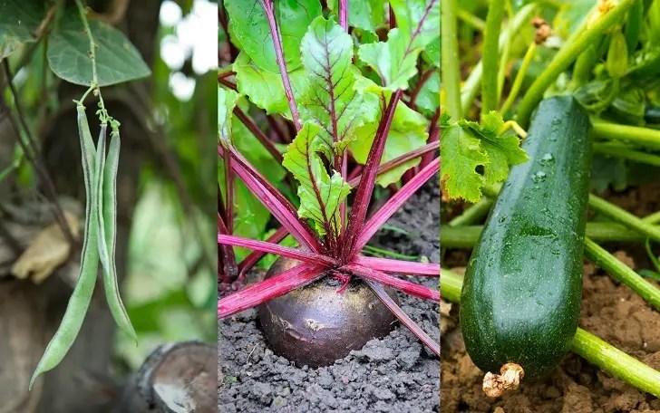 18 de los más rápidos en crecimiento verduras se puede cosechar en ...