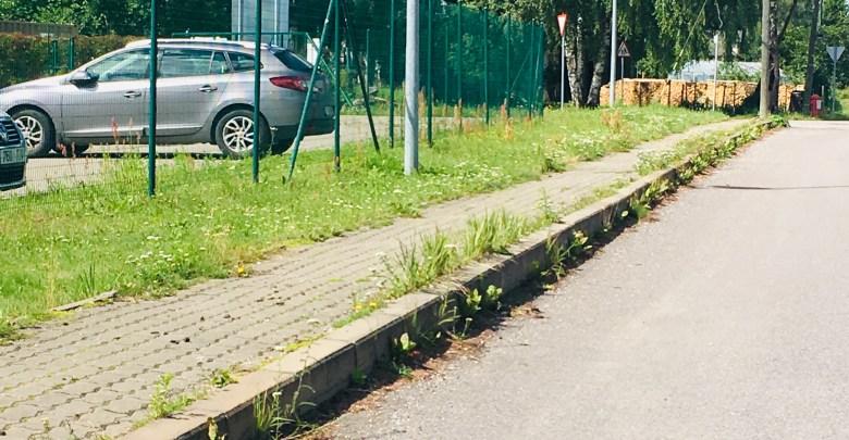 Photo of Suur lugu: Elva heakord lonkab kolmel jalal.
