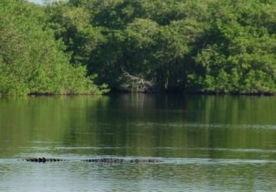 El Estero El Salado hoy sería parte de Marina Vallarta