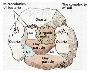 complexity-of-soil