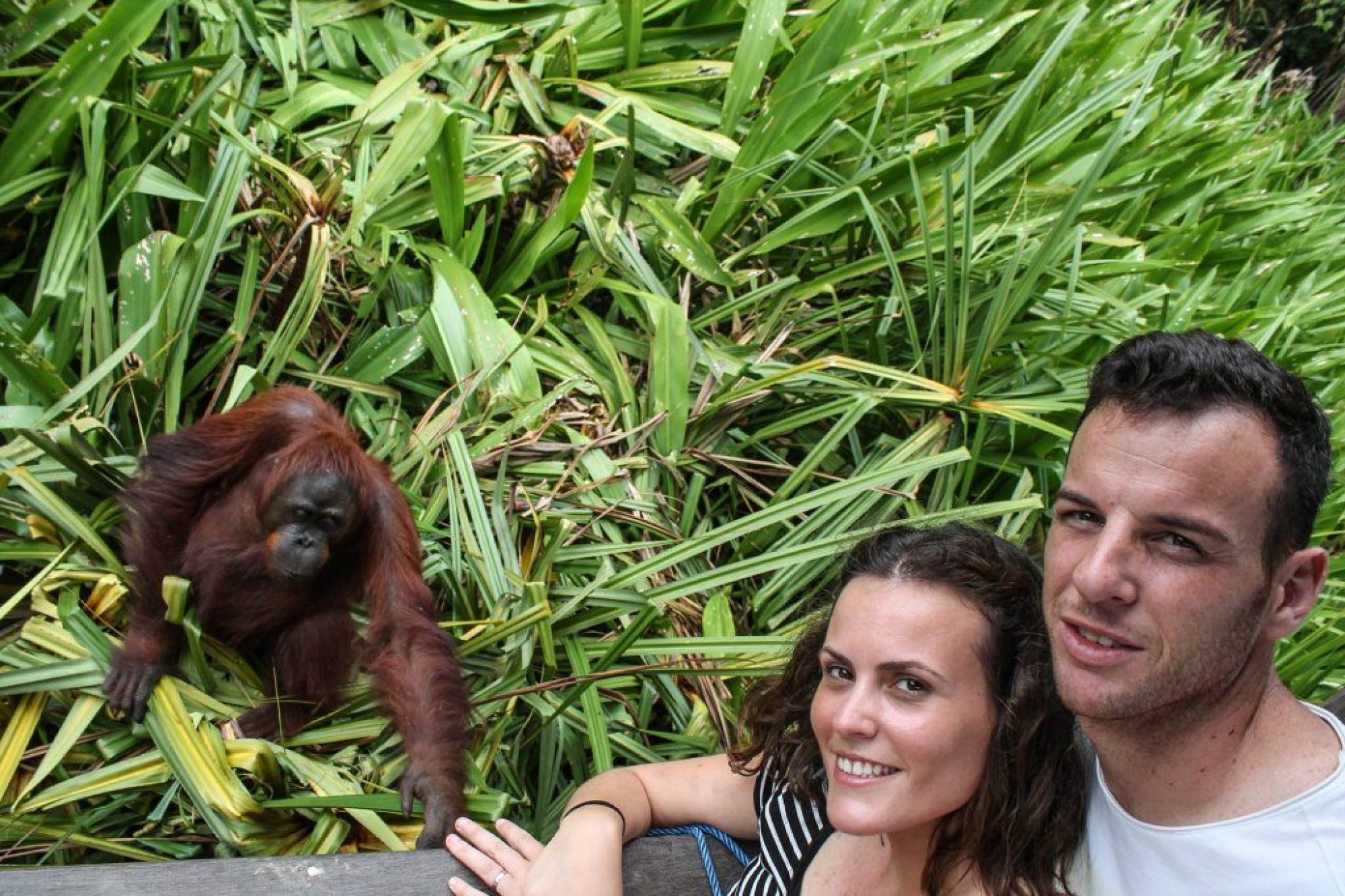 orangutanes-en-borneo-24