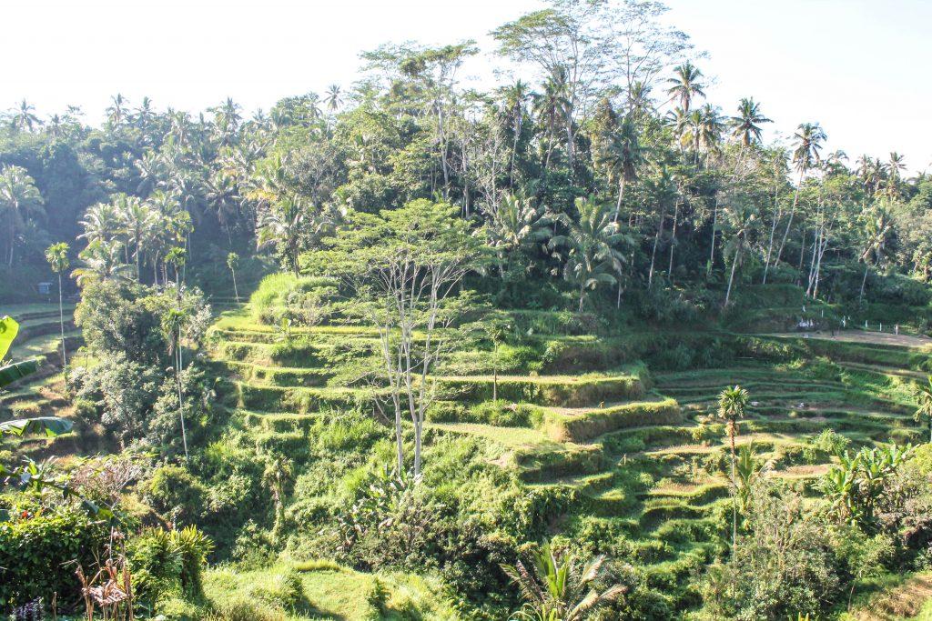 Bali con conductor - Día 1-9