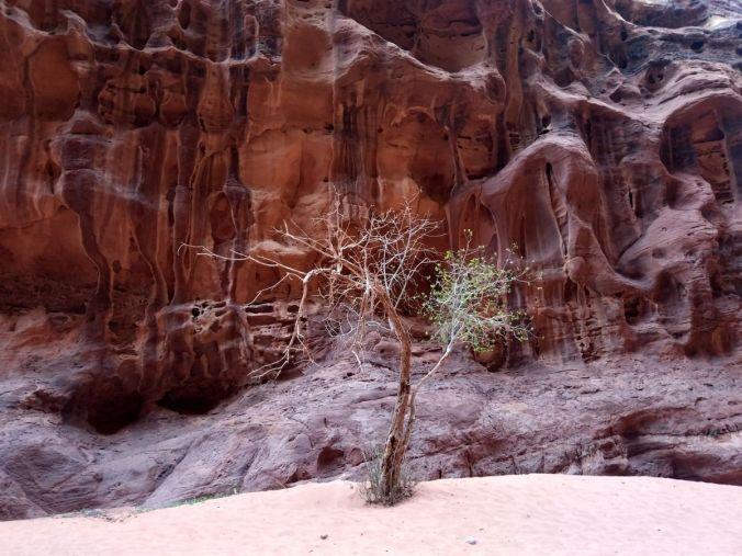 Wadi Rum - Viaje a Jordania - El Viaje No Termina