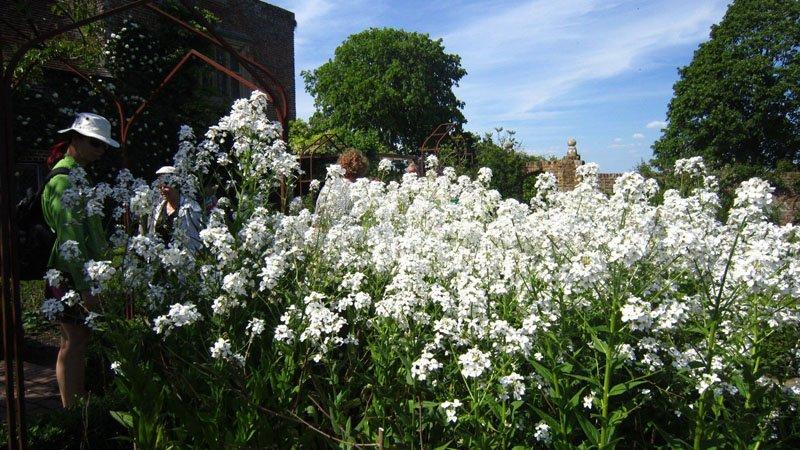 jardin-blanco-en-sisisnghurst