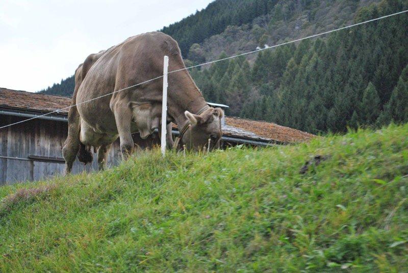 vals-vacas