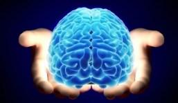 intestino CoronaVinos (II): El cerebro digestivo