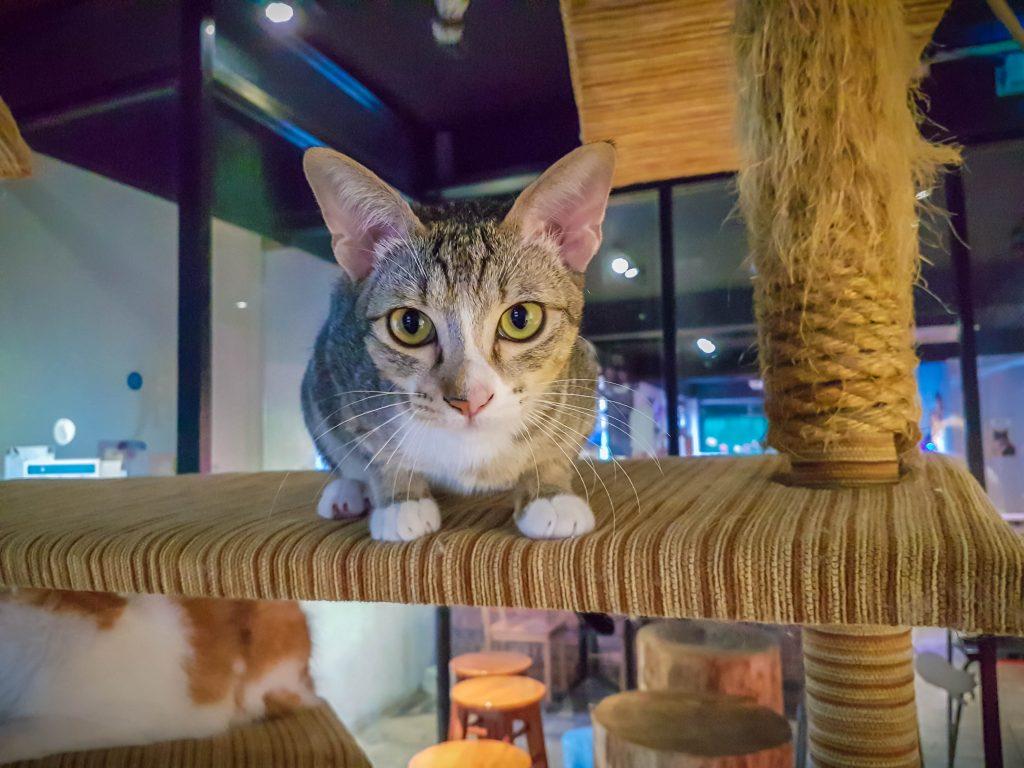 Kopicat - Cat Cafe Malaysia