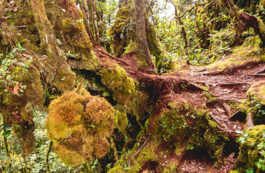 forest cameron highland