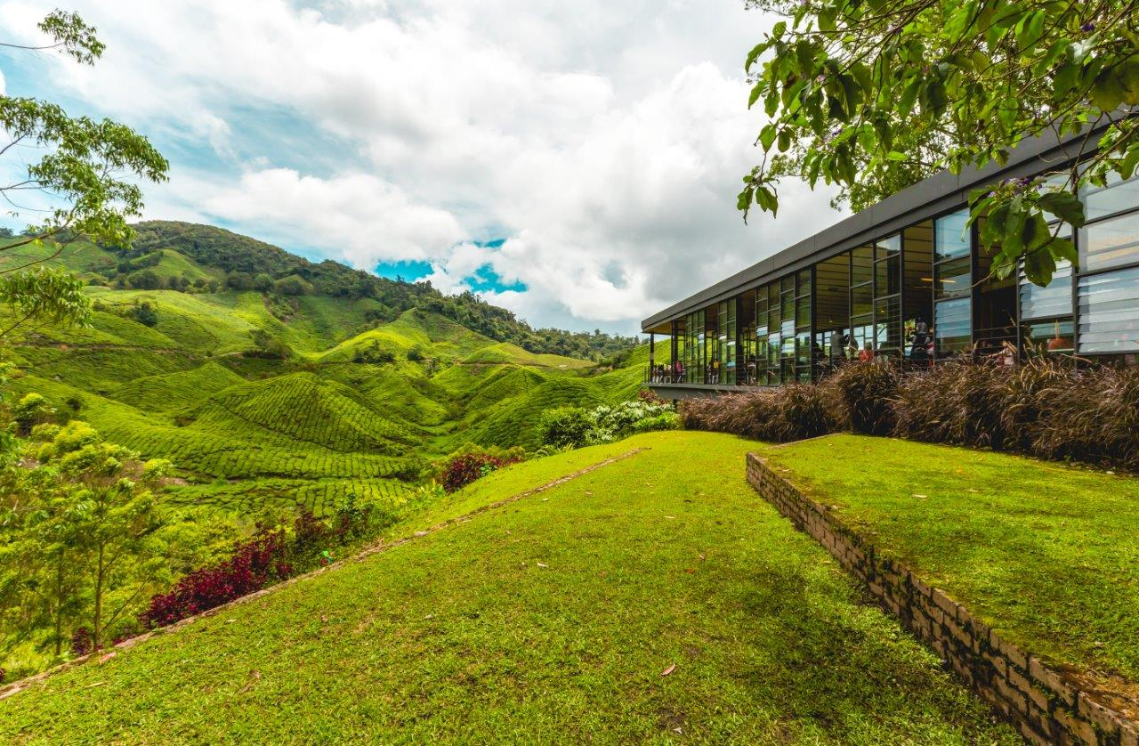 places to visit in cameron highlands activities