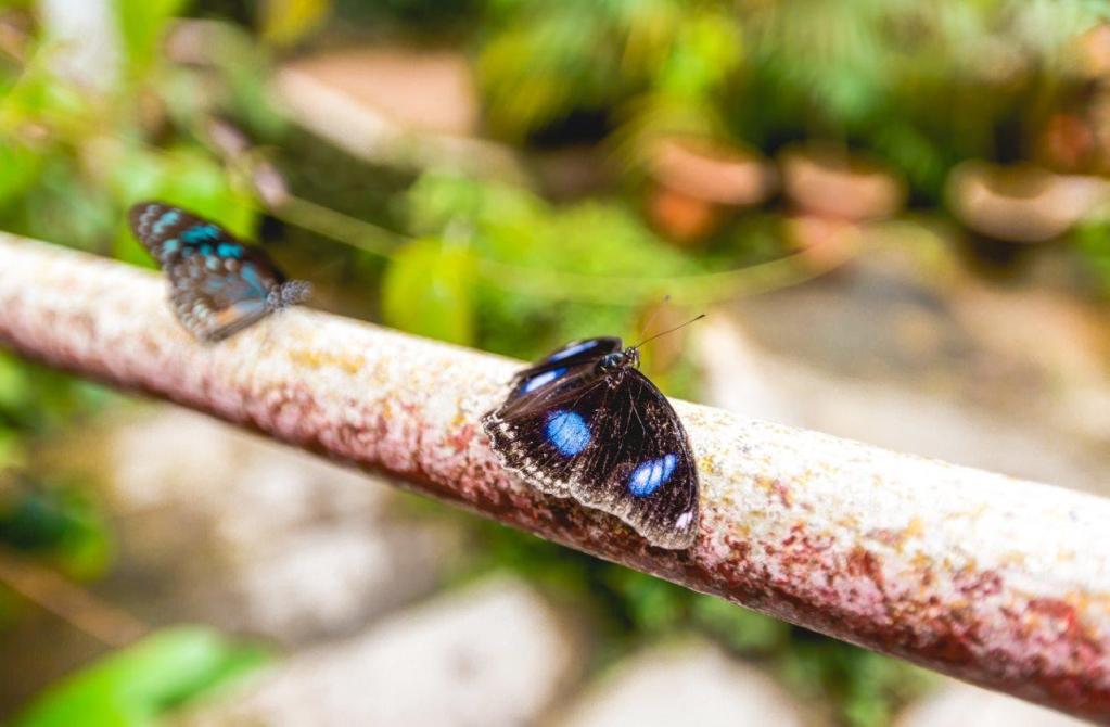 butterfly garden cameron