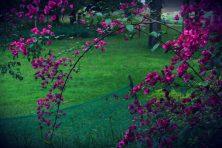 flower2web