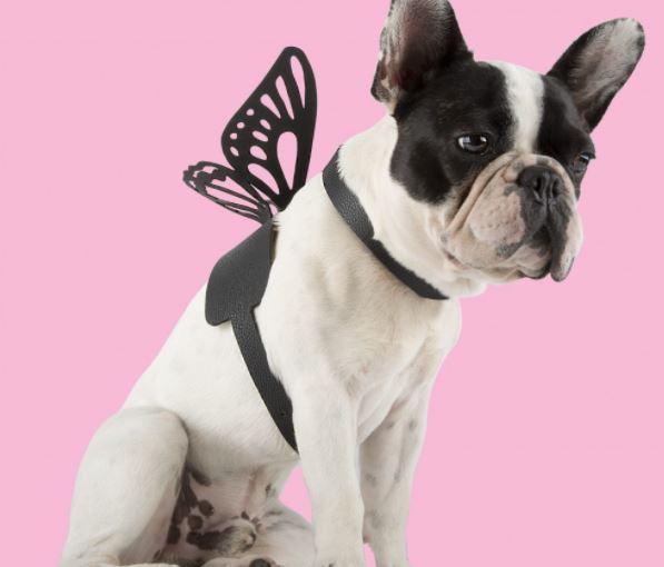 linea de mascotas inspiradas lady gaga