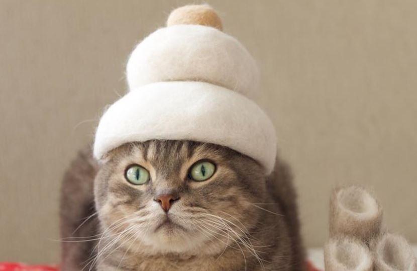 Puede un gato saber como se llama
