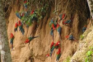 Posadas Amazonas