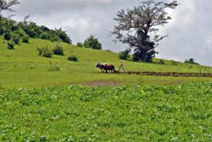 Join the Farm! Credit: Chetan Jawale, FlickrCC