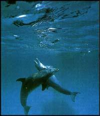 © Donal Tipton/Greenpeace 1994