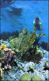 Bonaire Snorkeling Photo