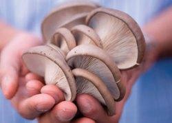 home-grown mushrooms' width=