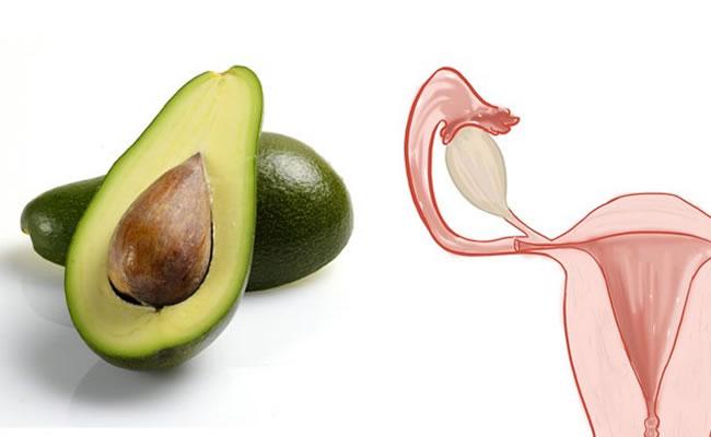 abacate utero