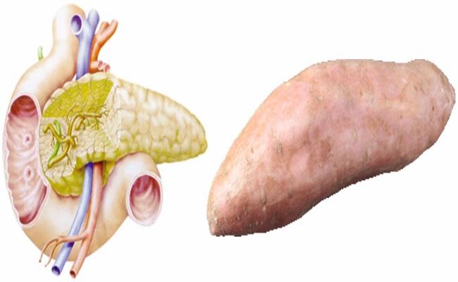 batata doce pancreas