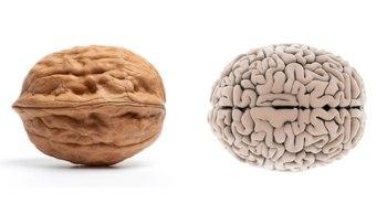 nozes cerebro