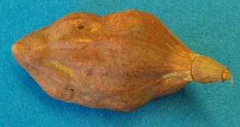 Fruta Baobá - superalimento