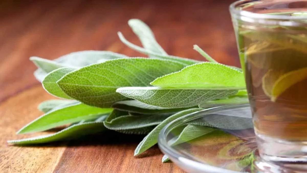 chá para diabetes - Chá de Sálvia
