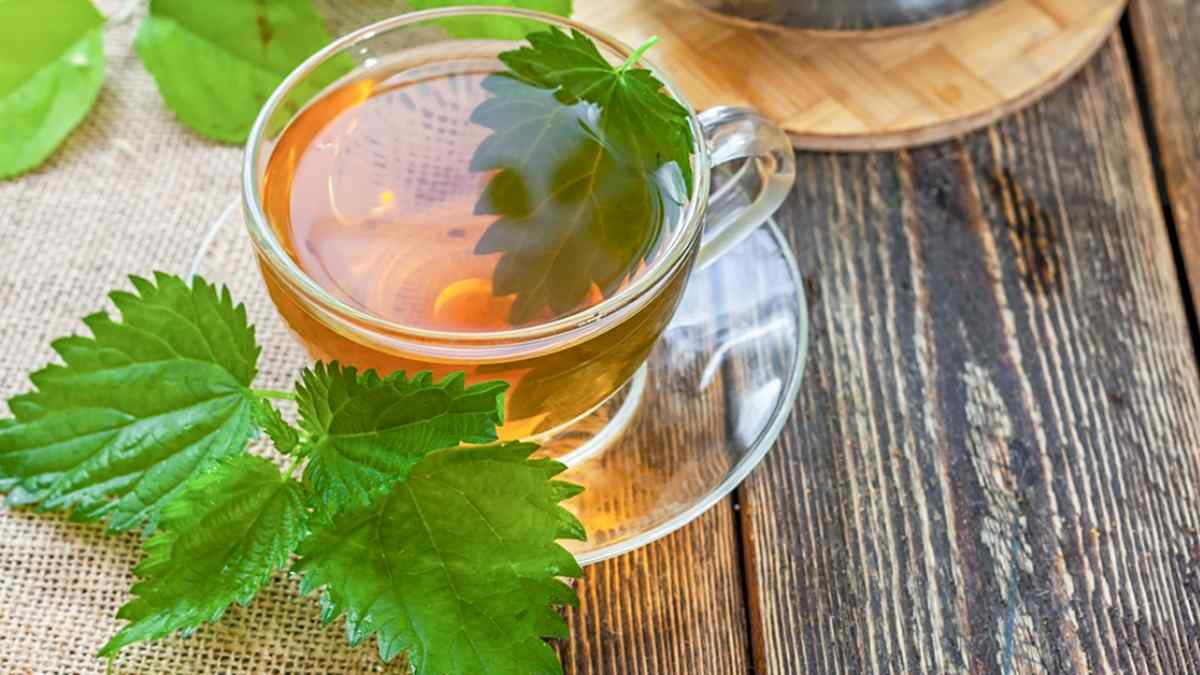 Chá de Urtiga Serve para Baixar a Glicose – Revela Estudo