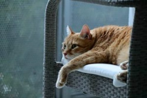 gato deitado na poltrona