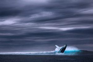 ocean-2051760_1920