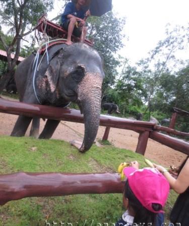 zoo gajah hatyai