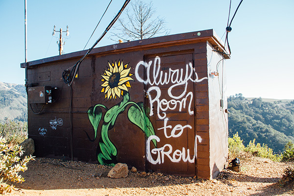 Shed with Always room to crow and a flower painted on it
