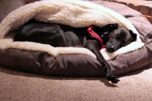 Moby dog training pet sitting
