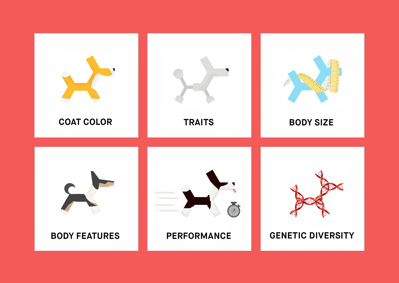 Dog Traits List
