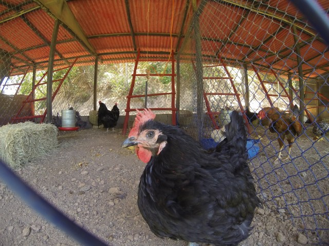 fazenda rico caipira