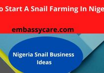 Snail Farming In Nigeria – Learn How To Grow Snails For Money